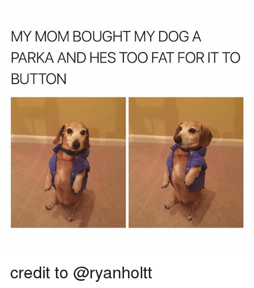 Fat, Mom, and Dog: MY MOM BOUGHT MY DOG A  PARKA AND HES TOO FAT FOR IT TO  BUTTON credit to @ryanholtt