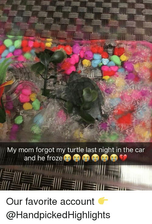 Memes, Turtle, and Mom: My mom forgot my turtle last night in the car  and he froze Our favorite account 👉 @HandpickedHighlights