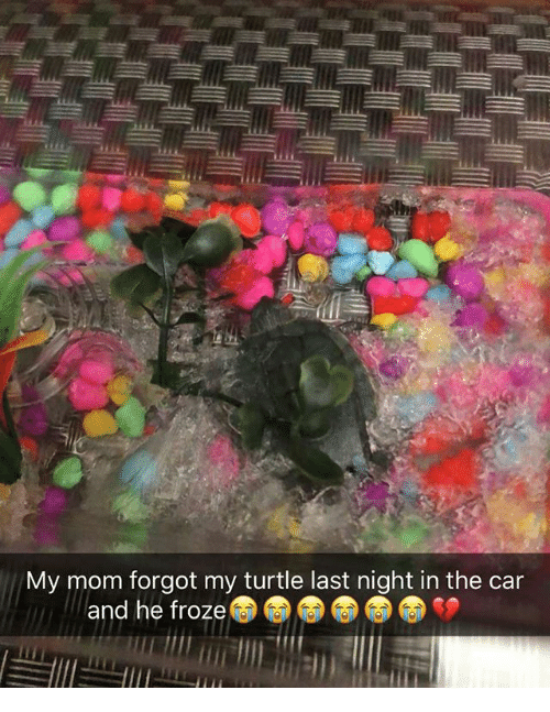 Memes, Turtle, and Mom: My mom forgot my turtle last night in the car  and he froze