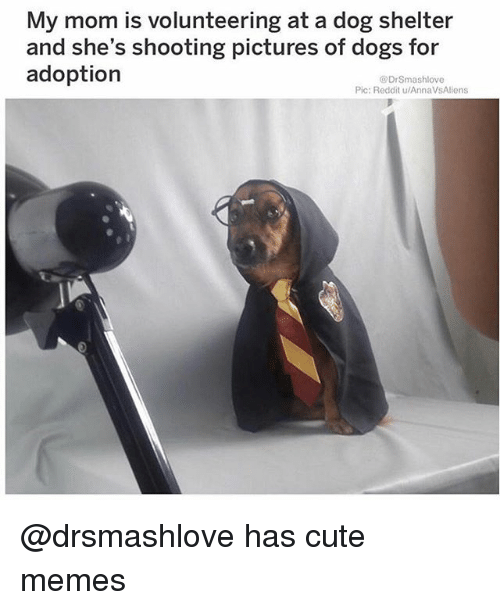 Cute, Dogs, and Funny: My mom is volunteering at a dog shelter  and she's shooting pictures of dogs for  adoption  DrSmashlove  Pic: Reddit u/AnnaVsAliens @drsmashlove has cute memes