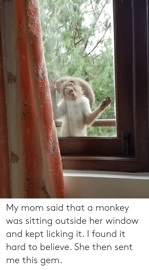 Monkey, Mom, and Her: My mom said that a monkey was sitting outside her window and kept licking it. I found it hard to believe. She then sent me this gem.