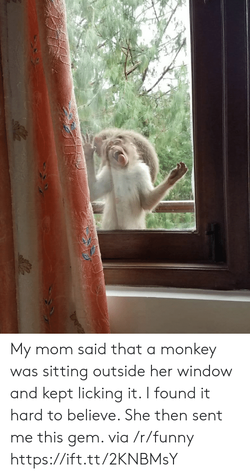 Funny, Monkey, and Mom: My mom said that a monkey was sitting outside her window and kept licking it. I found it hard to believe. She then sent me this gem. via /r/funny https://ift.tt/2KNBMsY