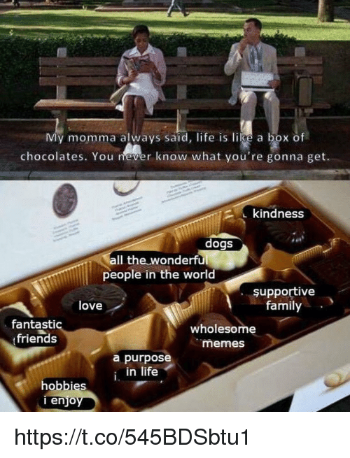 Dogs, Family, and Friends: My momma always said, life is like a box of  chocolates. You er know what you're gonna get.  2 kindness  dogs  Il the wonderful  people in the world  şupportive  family  love  fantastic  friends  wholesome  memes  a purpose  in life  hobbies  enjo https://t.co/545BDSbtu1