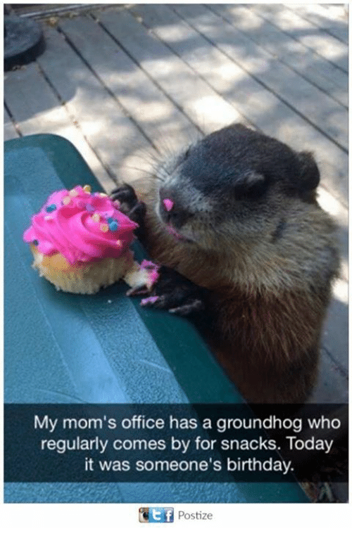Birthday, Moms, and Office: My mom's office has a groundhog who  regularly comes by for snacks. Today  it was someone's birthday.  Postize