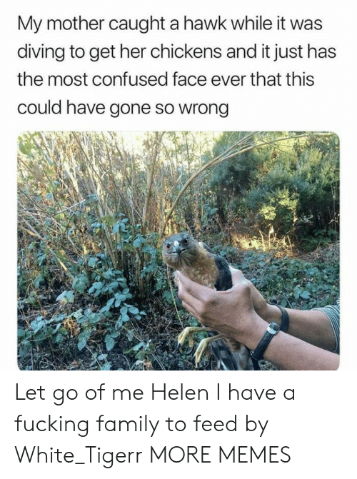 Confused, Dank, and Family: My mother caught a hawk while it was  diving to get her chickens and it just has  the most confused face ever that this  could have gone so wrong Let go of me Helen I have a fucking family to feed by White_Tigerr MORE MEMES