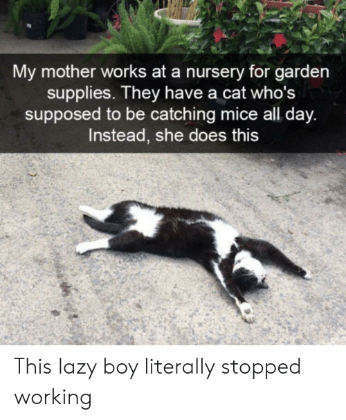 Lazy, Boy, and Cat: My mother works at a nursery for garden  supplies. They have a cat who's  supposed to be catching mice all day.  Instead, she does this This lazy boy literally stopped working