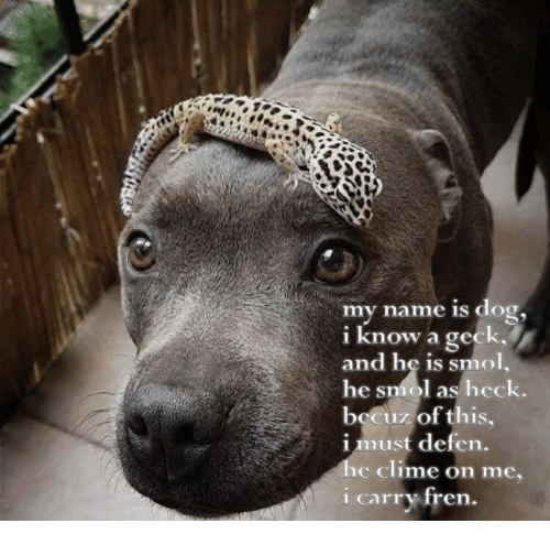geck i fucked your mom