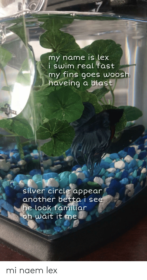 Silver, Another, and Name: my name is lex  i swim real fast  my fins goes woosh  a blast  haveing  silver circle appear  another betta i see  he look familiar  oh wait it me. mi naem lex