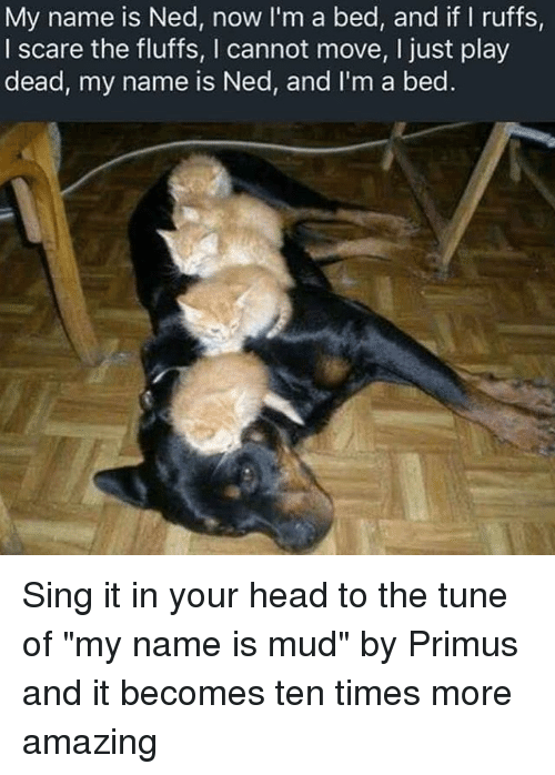 """Funny, Head, and Scare: My name is Ned, now I'm a bed, and if I ruffs,  I scare the fluffs, I cannot move, I just play  dead, my name is Ned, and I'm a bed Sing it in your head to the tune of """"my name is mud"""" by Primus and it becomes ten times more amazing"""