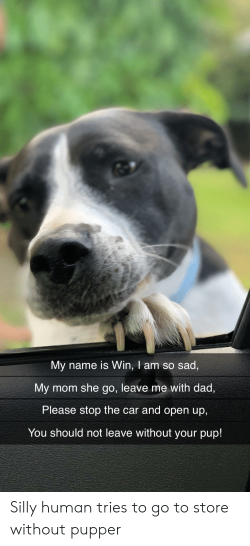 Dad, Sad, and Mom: My name is Win, I am so sad,  My mom she go, leave me with dad,  Please stop the car and open up,  You should not leave without your pup! Silly human tries to go to store without pupper