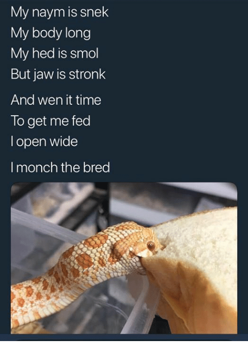 Time, Open, and Fed: My naym is snek  My body long  My hed is smol  But jaw is stronk  And wen it time  To get me fed  l open wide  I monch the bred