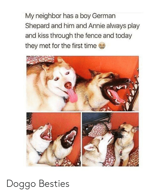 Annie, Kiss, and Time: My neighbor has a boy German  Shepard and him and Annie always play  and kiss through the fence and today  they met for the first time  ,3 Doggo Besties