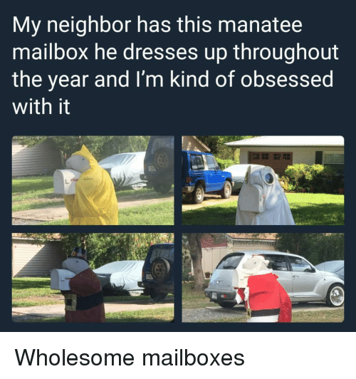 Dresses, Wholesome, and Manatee: My neighbor has this manatee  mailbox he dresses up throughout  the year and I'm kind of obsessed  with it <p>Wholesome mailboxes</p>