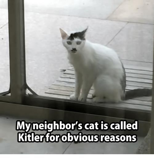 bfc21e98b6 My Neighbor s Cat Is Called Obvious Reasons Kitler for