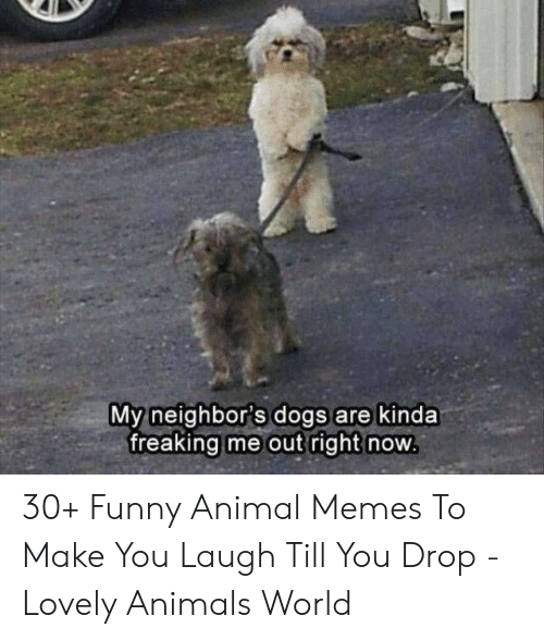 Animals, Dogs, and Funny: My neighbor's dogs are kinda  freaking me out right now 30+ Funny Animal Memes To Make You Laugh Till You Drop - Lovely Animals World