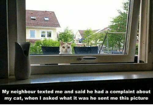 Memes, 🤖, and Cat: My neighbour texted me and said he had a complaint about  my cat, when I asked what it was he sent me this picture