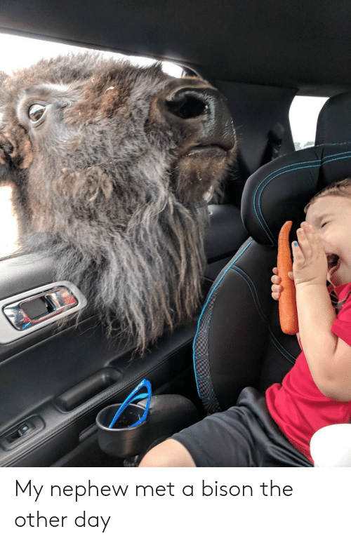 Bison Are Ready For Thanksgiving >> My Nephew Met A Bison The Other Day Bison Meme On Me Me