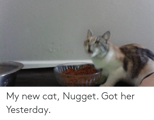 Got, Her, and Cat: My new cat, Nugget. Got her Yesterday.