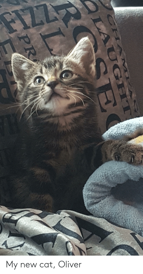 Cat, New, and New Cat: My new cat, Oliver