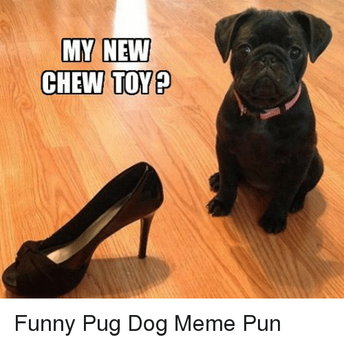 Funny, Meme, and Dog: MY NEW  CHEW TOY? Funny Pug Dog Meme Pun