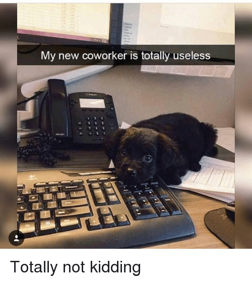https://me me/i/my-new-coworker-is-totally-useless-totally-not
