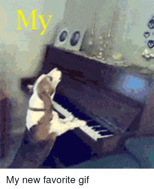 Funny, Gif, and New: My new favorite gif