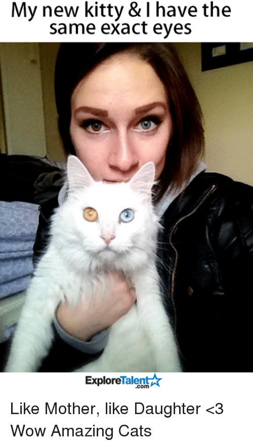 Memes, 🤖, and  Talent Explore: My new kitty & have the  same exact eyes  Talent  Explore Like Mother, like Daughter <3  Wow Amazing Cats