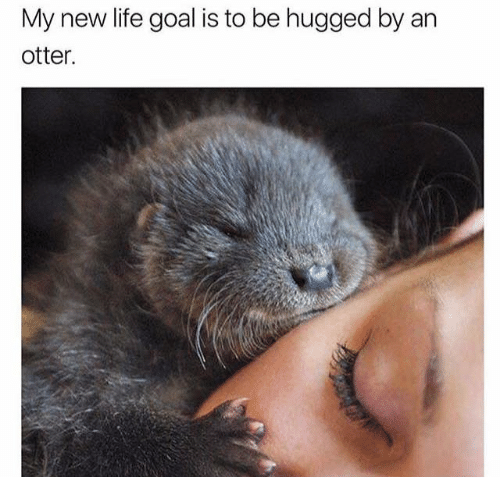 Dank, Life, and Goal: My new life goal is to be hugged by an  otter.