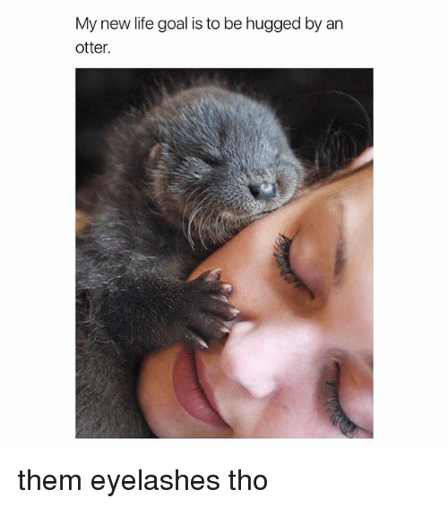 Life, Goal, and Girl Memes: My new life goal is to be hugged by an  otter. them eyelashes tho