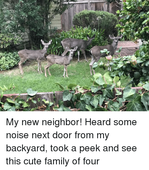 Cute, Family, and Next: My new neighbor! Heard some noise next door from my backyard, took a peek and see this cute family of four