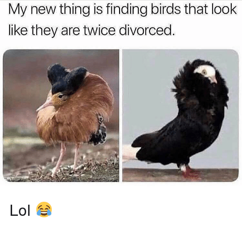 Lol, Memes, and Birds: My new thing is finding birds that look  like they are twice divorced. Lol 😂