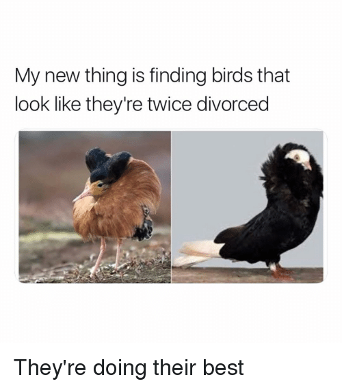 Funny, Best, and Birds: My new thing is finding birds that  look like they're twice divorced They're doing their best
