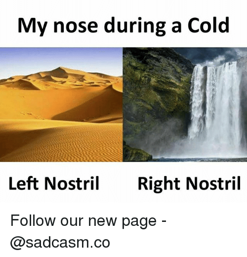 Memes, Cold, and 🤖: My nose during a Cold  Left NostrilRight Nostril Follow our new page - @sadcasm.co