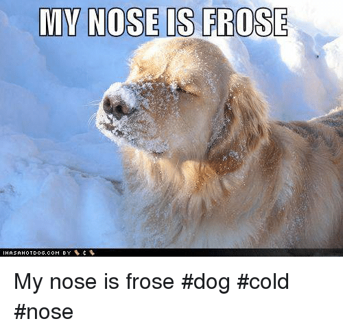 dog has cold nose