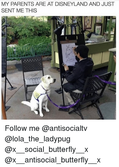 Disneyland, Memes, and Parents: MY PARENTS ARE AT DISNEYLAND AND JUST  SENT ME THIS Follow me @antisocialtv @lola_the_ladypug @x__social_butterfly__x @x__antisocial_butterfly__x