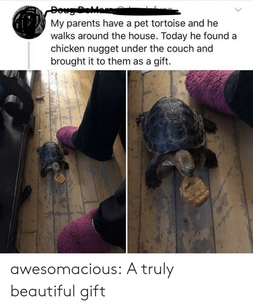 Beautiful, Parents, and Tumblr: My parents have a pet tortoise and he  walks around the house. Today he found  chicken nugget under the couch and  brought it to them as a gift. awesomacious:  A truly beautiful gift