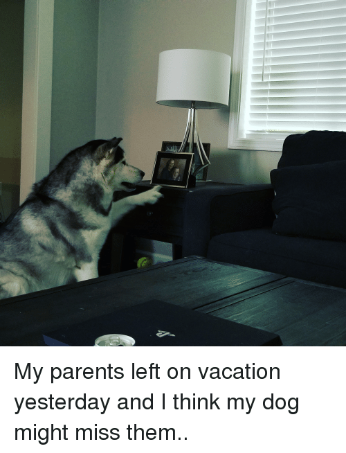 Parents, Vacation, and Dog: My parents left on vacation yesterday and I think my dog might miss them..