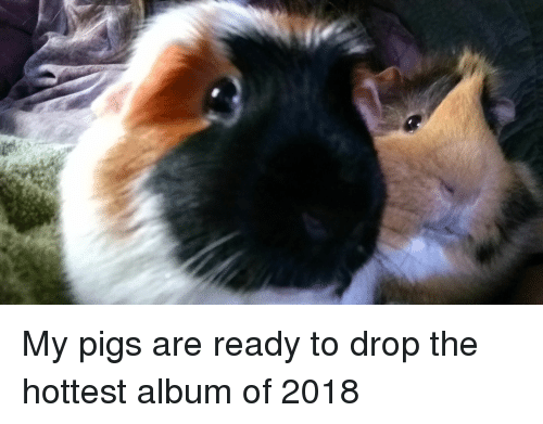 Reese's, Moe., and Pigs: My pigs are ready to drop the hottest album of 2018