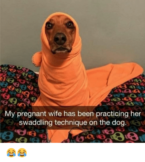 my pregnant wife has been practicing her swaddling technique on 22886151 ✅ 25 best memes about pregnant wife pregnant wife memes