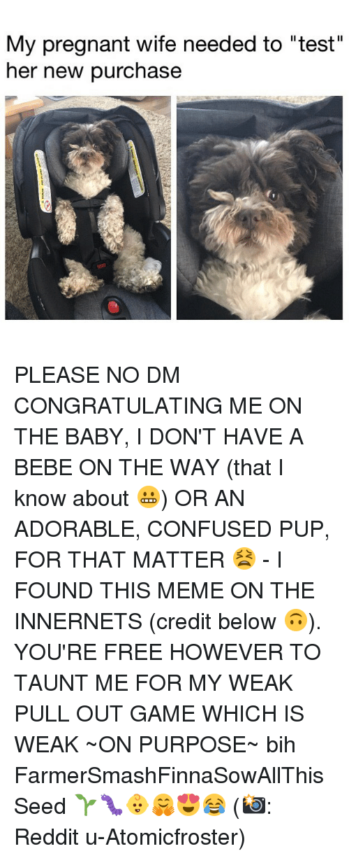 """Confused, Meme, and Memes: My pregnant wife needed to """"test""""  her new purchase PLEASE NO DM CONGRATULATING ME ON THE BABY, I DON'T HAVE A BEBE ON THE WAY (that I know about 😬) OR AN ADORABLE, CONFUSED PUP, FOR THAT MATTER 😫 - I FOUND THIS MEME ON THE INNERNETS (credit below 🙃). YOU'RE FREE HOWEVER TO TAUNT ME FOR MY WEAK PULL OUT GAME WHICH IS WEAK ~ON PURPOSE~ bih FarmerSmashFinnaSowAllThisSeed 🌱🐛👶🤗😍😂 (📸: Reddit u-Atomicfroster)"""