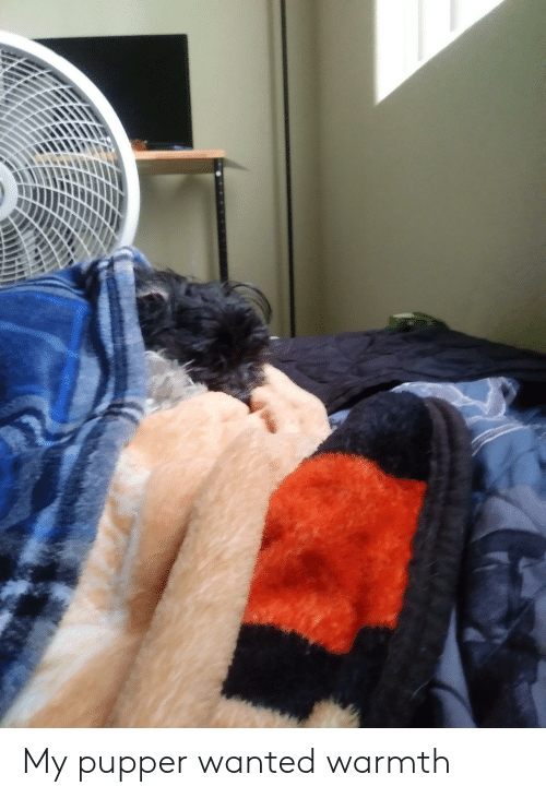 Wanted, Warmth, and Pupper: My pupper wanted warmth