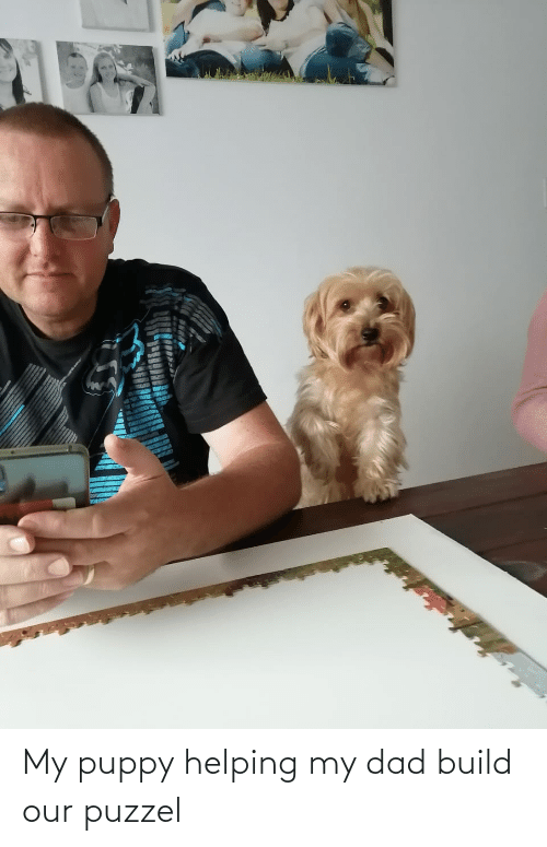 Dad, Puppy, and Build: My puppy helping my dad build our puzzel