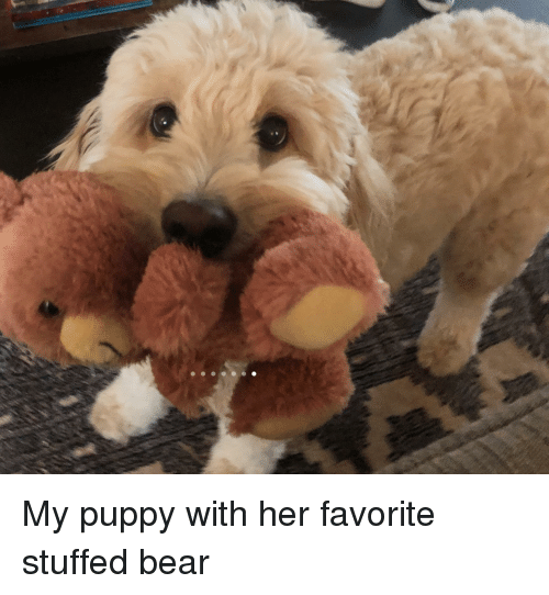 Bear, Puppy, and Her