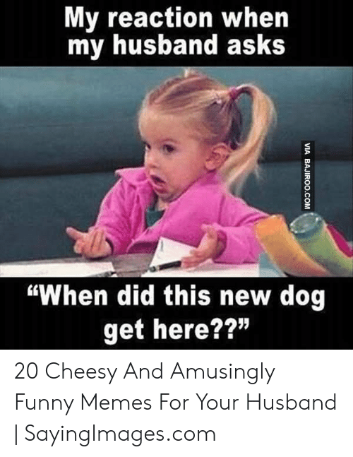"""Funny, Memes, and Husband: My reaction when  my husband asks  """"When did this new dog  get here??"""" 20 Cheesy And Amusingly Funny Memes For Your Husband 