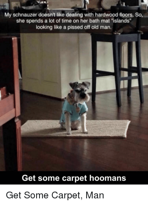 """Old Man, Schnauzer, and Time: My schnauzer doesn't like dealing with hardwood fioors, So,  she spends a lot of time on her bath mat """"islands""""  looking like a pissed off old man.  Get some carpet hoomans Get Some Carpet, Man"""