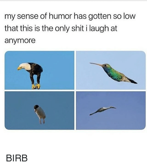 Memes, Shit, and 🤖: my sense of humor has gotten so low  that this is the only shit i laugh at  anymore BIRB