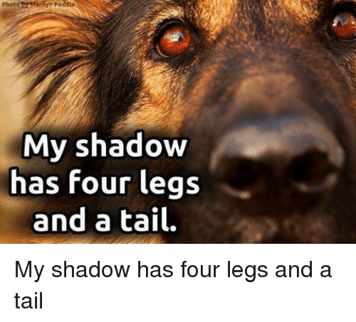 Memes And Tails My Shadow Has Four Legs A Tail