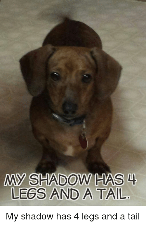 Memes And Tails My Shadow Has Legs A Tail