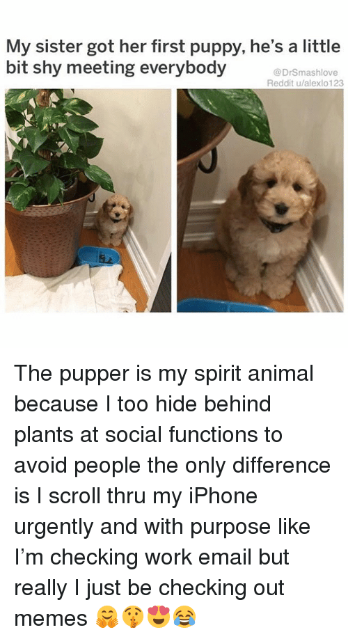 Iphone, Memes, and Reddit: My sister got her first puppy, he's a little  bit shy meeting everybody  @DrSmashlove  Reddit u/alexlo123 The pupper is my spirit animal because I too hide behind plants at social functions to avoid people the only difference is I scroll thru my iPhone urgently and with purpose like I'm checking work email but really I just be checking out memes 🤗🤫😍😂