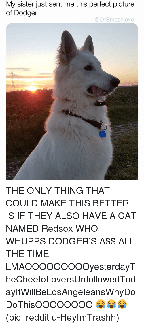 Memes, Reddit, and Time: My sister just sent me this perfect picture  of Dodger  @DrSmashlove THE ONLY THING THAT COULD MAKE THIS BETTER IS IF THEY ALSO HAVE A CAT NAMED Redsox WHO WHUPPS DODGER'S A$$ ALL THE TIME LMAOOOOOOOOOyesterdayTheCheetoLoversUnfollowedTodayItWillBeLosAngeleansWhyDoIDoThisOOOOOOOO 😂😂😂 (pic: reddit u-HeyImTrashh)